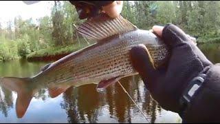 Рыбалка на кольском полуострове хариус