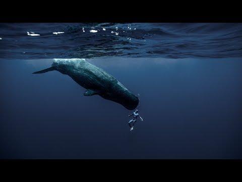 [VIDÉO] Le dernier court métrage fascinant de Guillaume Néry !