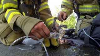 Мир не без добрых людей  Пожарники Cat