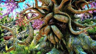 Skyrim mod: Great Deku Tree / ВЕЛИКОЕ ДЕРЕВО ДЕКУ
