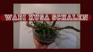 WABIKUSA Schalen bepflanzen