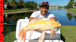CATCHING RARE BUTTERFLY KOI FISH in LAKE!