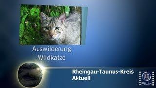 preview picture of video 'Heidenrod - Aktuell      Auswilderung Wildkatze'