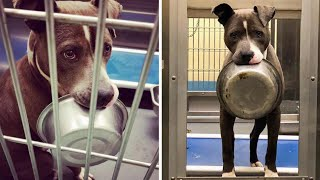 Shelter Dog Refused Let Go of His Beloved Bowl Beacause of Heartbreaking Reason