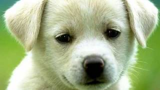 My Choice 199 - Patti Page: How Much is that Doggie in the Window