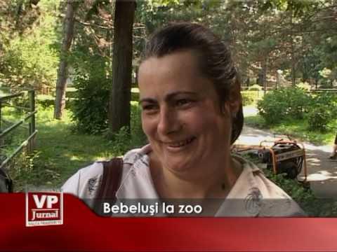 Bebelusi la zoo