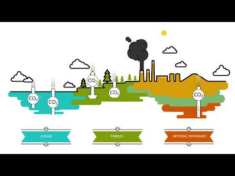 What are carbon sinks? | Sustainability for all - ACCIONA