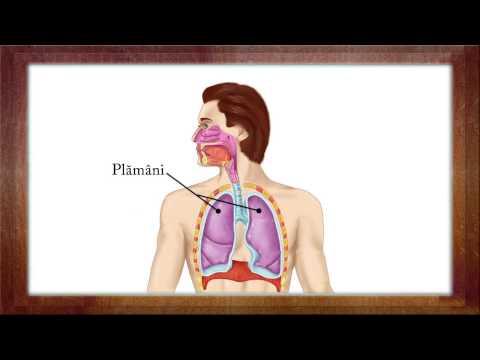Cancer pulmonar transmitere