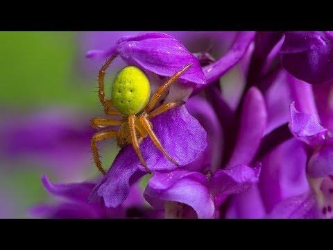 Если снятся пауки