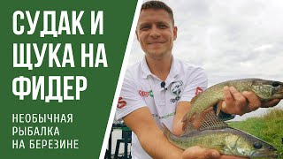 Форум фидерной ловли в беларуси