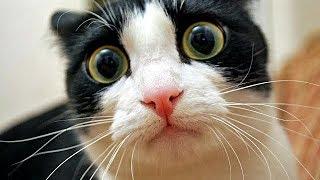 Gatos Chistosos - Perros Chistosos - Videos Graciosos #6