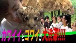SixTONES'【No-Planning ¥100,000 Trip】 An Overnight Instant Bus Tour Part 3