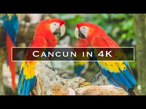 סיור בעיר קנקון באיכות 4K מדהימה