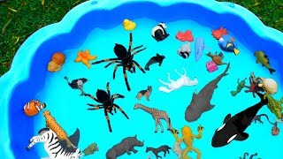 Lots of Zoo Wild Animals Learn Colors For Children With Safari Videos