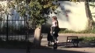 Бродячие собаки у школы № 56 в Хабаровске
