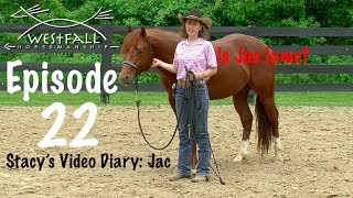 Stacy's Video Diary: Jac- Episode 22-When a horse goes lame or gets sore