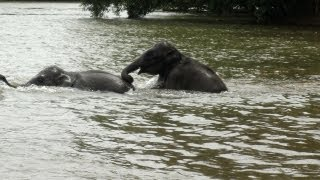 Bathing time for Elephants