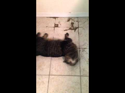 0 Celery Seeds And The Cat