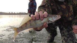 Рыбалка в зиброво на оке