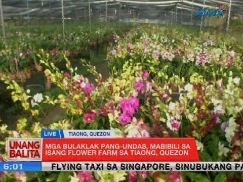 [GMA]  UB: Mga bulaklak pang-Undas, mabibili sa isang flower farm sa Tiaong, Quezon