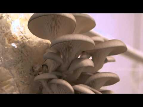 Malattie associate a un fungo di unghie