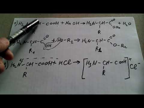 108. Химические свойства аминокислот