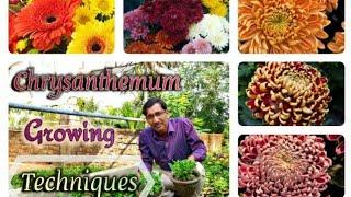 LEARN THE COMPLETE PROCEDURE OF GROWING CHRYSANTHEMUM.