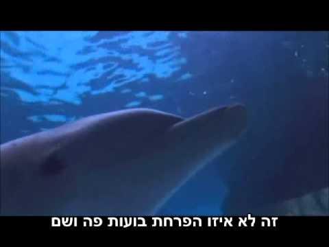 במה דולפינים משחקים?