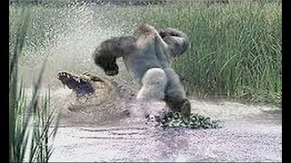 Gorilla Fight vs Crocodile Fight | Animals Dual Fighting Comparison