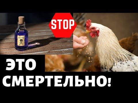 , title : 'Топ 10 Ядовитые продукты для кур! Чем нельзя кормить! Куры несушки, содержание, разведение, курятник