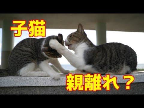 子猫親離れ? Kitten away from parents?