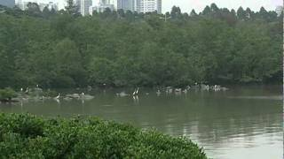 Video : China : A guide to ShenZhen 深圳 (part 1/2) - video