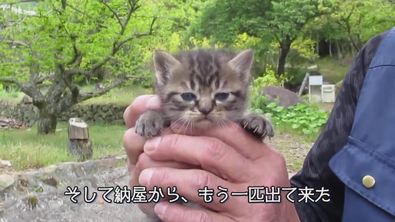 クンタ&子猫、病院へ  出発直前、子猫が倍増した記録