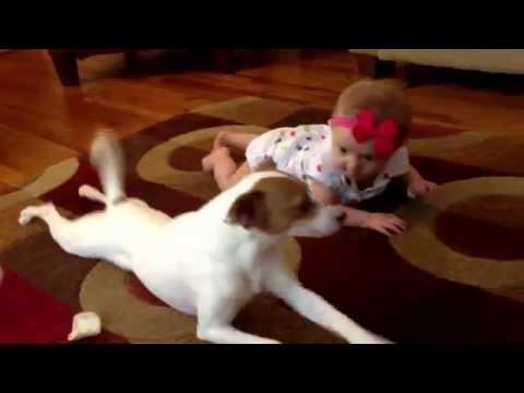 Chú chó dạy em bé tập bò gây sốt