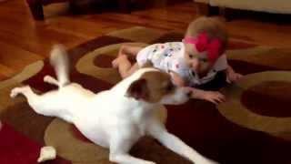Джек-рассел-терьер учит ребенка ползать