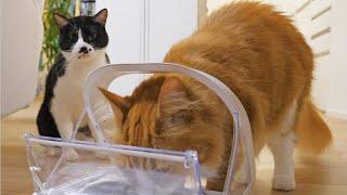 We got a microchip cat feeder for only Haku