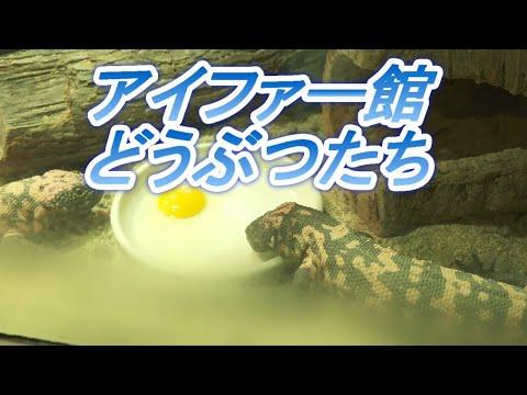 天王寺動物園爬虫類生体館アイファー ON祭特別企画