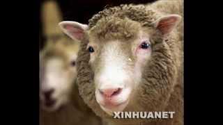 白爛數羊歌