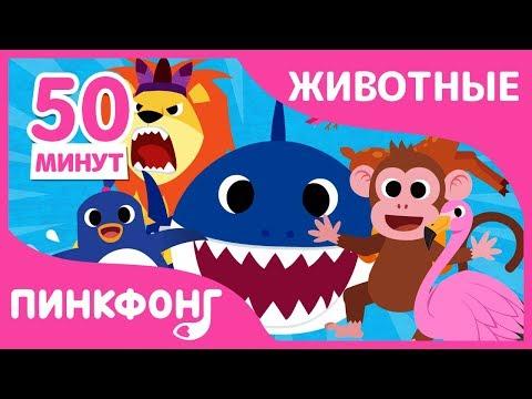 Акулёнок и другие песни | Песни про Животных | +Сборники | Пинкфонг Песни для Детей