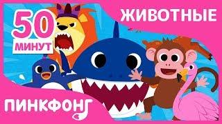 Акулёнок и другие песни   Песни про Животных   +Сборники   Пинкфонг Песни для Детей