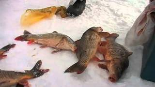 "Карп,""Зеркальный карп""- база рыбаков.""Айда на рыбалку!"" вып.5"
