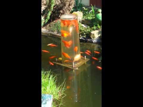 Fischglas im Gartenteich