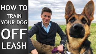 Off Leash Training: How To Train Your Dog To Listen Off Leash