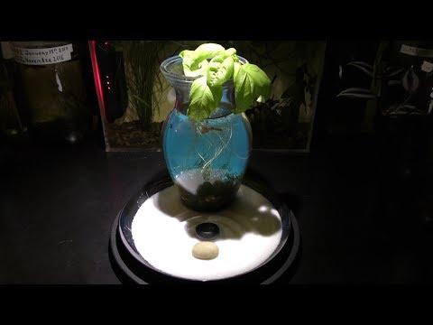 Aquarium in a vase