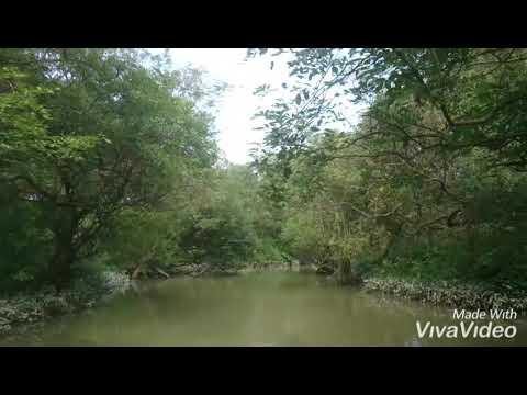 রাতারগুল সিলেট /Ratargul swamp forest sylhet