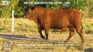 Coro 2429 b4 fiv