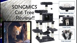 SONGMICS Cat Tree Condo Review!! Bonus: Introducing Our New Kitten!!