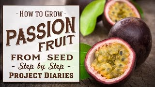 ★ How to: Grow Passion fruit from Seed (A Complete Step by Step Guide)