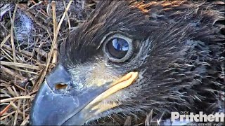 SWFL Eagles~ Mom Reflected In E16's Eye! Wingers, Big Hops Across Nest To Rails &  Stretches 5.20.20