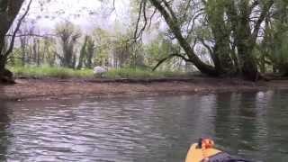 preview picture of video 'Kanutour von Gaissau bis zum Bodensee'